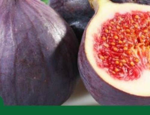 ¿Cual es la fruta más antigua del mundo?