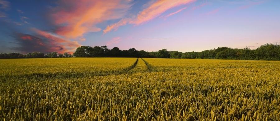 campo-fitonutrient-pesticidas