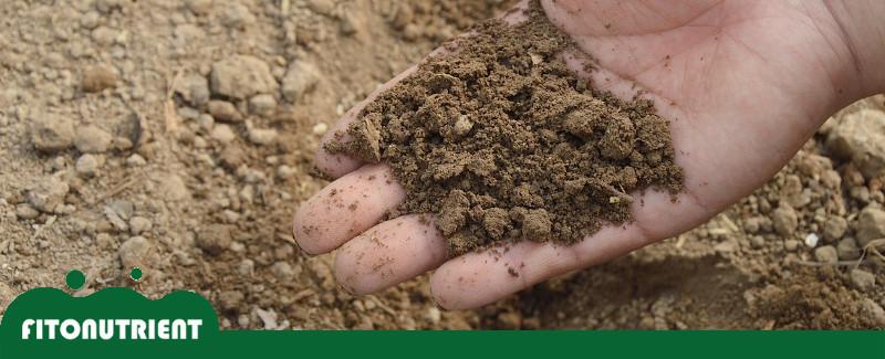 destacada-blog-fito-nutrient-fertilizantes-ecologicos
