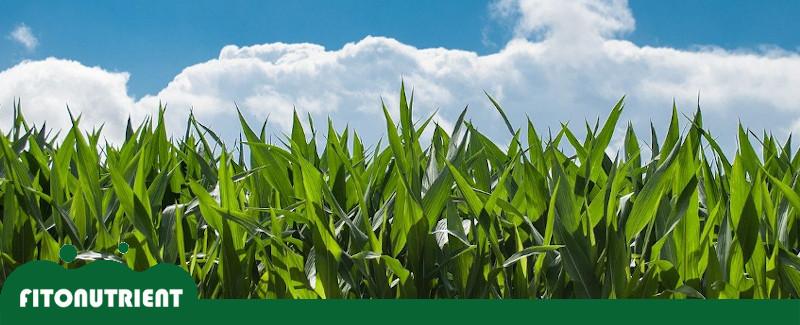 bioestimulantes-agricola-fitonutrient