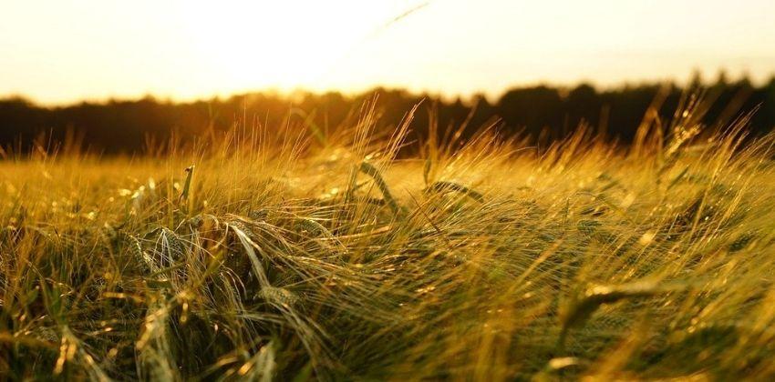 bioestimulantes-agricolas
