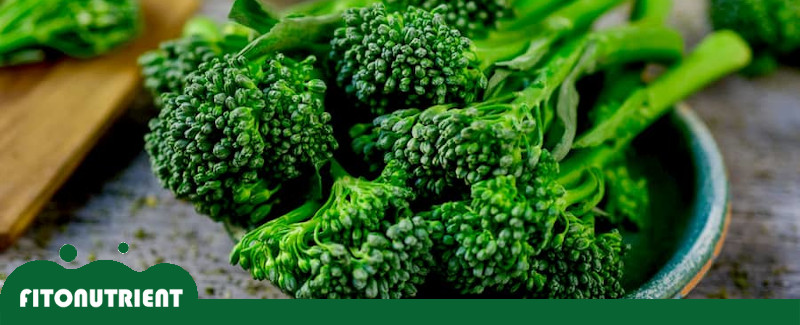 imagen-destacada-bimi-fito-nutrient