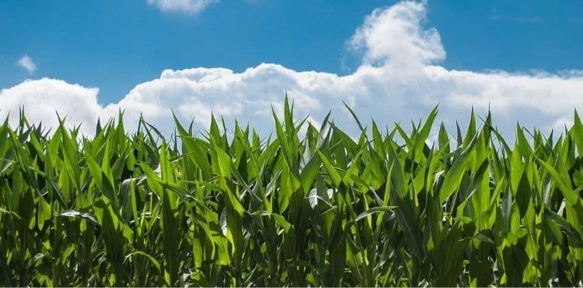 consejos-para-cultivar-fitonutrient-1