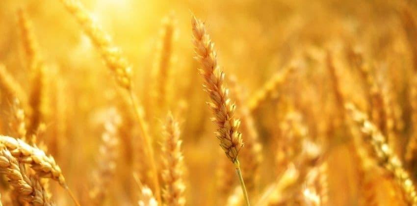 consejos-para-cultivar-fitonutrient