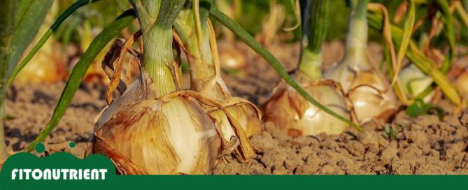 destacada-blog-cultivos-fitonutrient