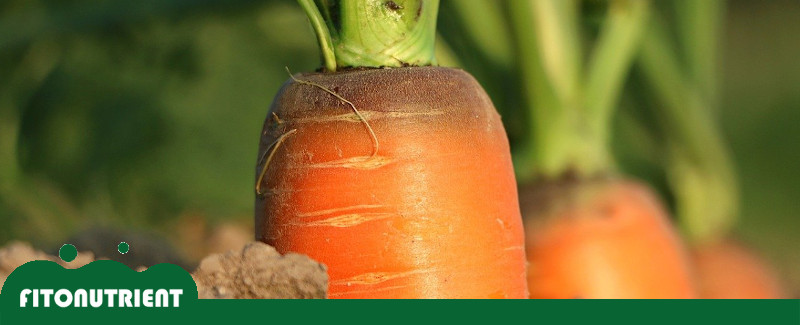 destacada-consejos-para-cultivar-fitonutrient