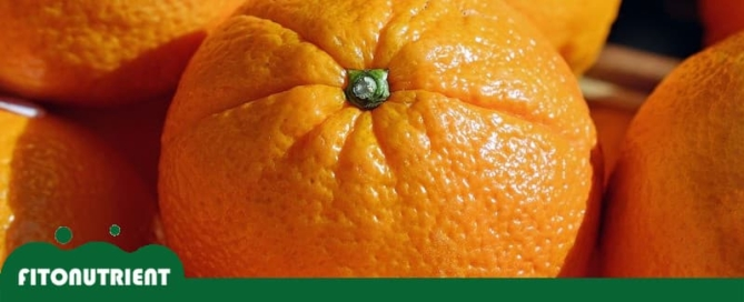 navelina-clemenules-ava-asajablog-fitonutrient
